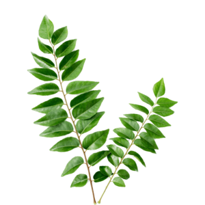curry leaves, bhrusanga patra, curry patta