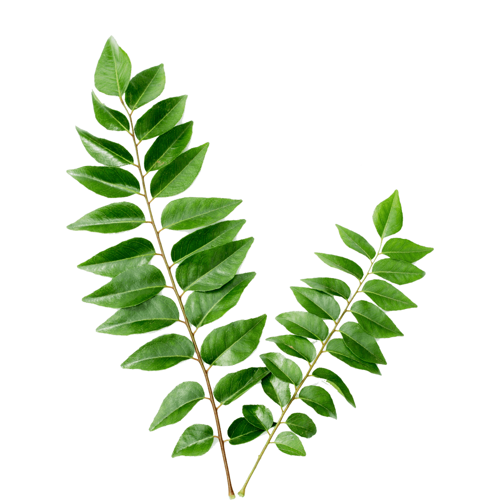 curry leaves  bhrusanga patra  order now at bazaarfresh in free clip art of applesauce free clipart of apple pencil