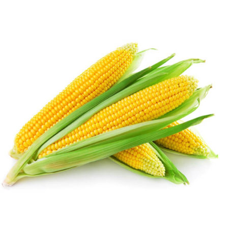 corn, buta, makka, maize